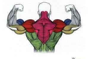 В чем сила, брат? Какая мышца в теле человека самая сильная