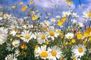 Почему июль назвали июлем и чем летние месяцы так восхитительно прекрасны