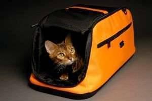Как перевезти кошку на дальнее расстояние: в самолете, поезде и автомобиле