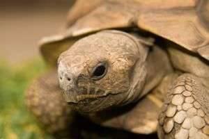 Чтобы питомец был здоровым: как ухаживать за черепахой в домашних условиях
