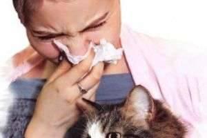Как отличить аллергию на кошек от других заболеваний?