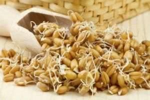 Как прорастить пшеницу — полезная и здоровая пища своими руками