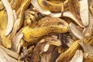 Банановая кожура как удобрение для комнатных растений и садовых цветов