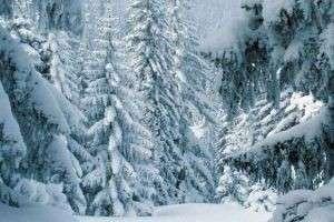 Почему январь назвали январем: о происхождении названий зимних месяцев