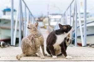 Чесотка у кошек и собак: симптомы, лечение и профилактика болезни в домашних условиях