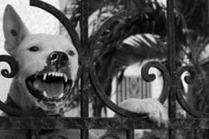 Что делать, если укусила собака, или Нет причин для паники!
