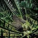 Что такое высшие растения?