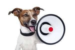 Что делать, если у соседей постоянно лает собака?