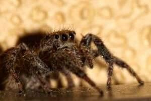 Самые ядовитые пауки в мире: хит-парад хладнокровных членистоногих киллеров