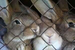 Правильный размер клетки для кроликов — важный фактор их успешного содержания
