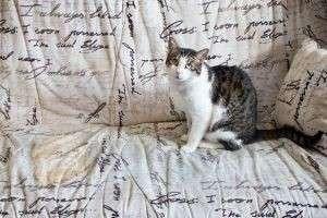 Как вывести запах кошачьей мочи с дивана и с ковра быстро и навсегда
