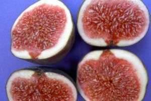 Чем полезен инжир? Что дают нам плоды фигового дерева?