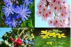 Цветочная терапия - миф или реальность?