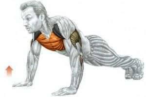 Отжимания — какие мышцы качаются?