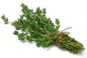 Тимьян: полезные свойства, его применение и рецепты от различных недугов