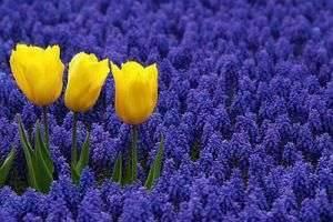 Формируем клумбы: какие цветы сажать осенью?