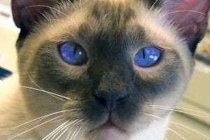 Почему коты любят валерьянку: невинная шалость или пагубная страсть