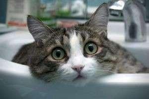 Как правильно помыть кота в домашних условиях?
