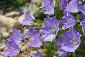 Какие цветы сажать в январе – рекомендации для дачников и цветоводов