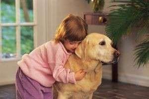Какую собаку завести в квартире? Критерии выбора, подходящие породы