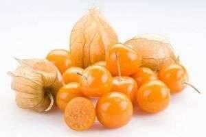 Романтическое растение физалис: полезные свойства плодов и корней