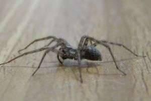 Как избавиться от пауков в квартире, а также в офисе или на даче