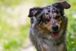 Как научить собаку команде «Голос»? Спросим у опытных собаководов