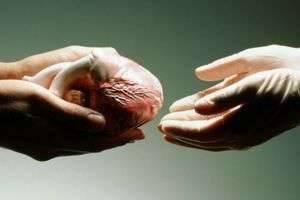 Человек может прожить без некоторых органов или с их существенно уменьшенными частями