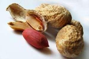 Как растет арахис в природе и домашних условиях, когда и как садить арахис