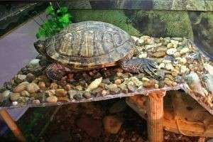 Как сделать островки, мостики, домики для черепах своими руками?