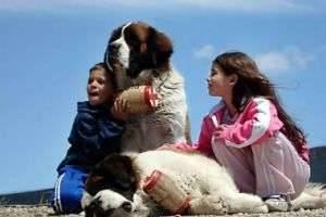 Самая добрая порода собак — выбираем друга для всей семьи