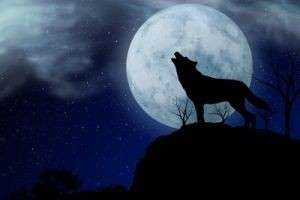 К чему снится волк? Толкование сновидений