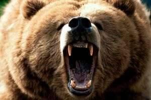 ТОП-10 самых опасных животных в мире