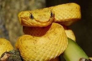 Смертельно опасная красота, или Самые ядовитые змеи мира