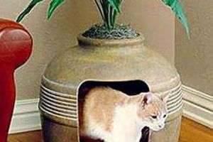 Как отучить кота гадить где попало раз и навсегда