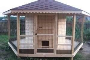 Курятник своими руками  — уютный домик для несушек