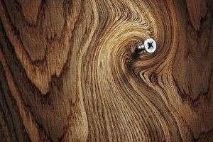 Самые дорогие породы древесины