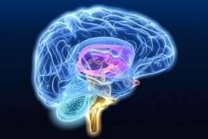 Симптомы дистонии сосудов головного мозга