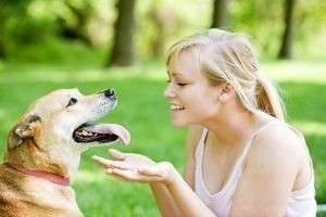 Правила содержания собаки в квартире согласно Закону и комфорту