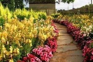 Многолетние цветы для клумбы: для тенистого сада и солнечных равнин