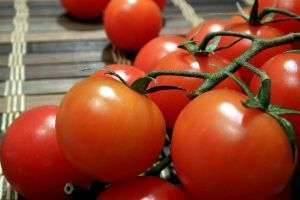 Как вырастить урожай помидор на грядке под окном, не используя вредные удобрения?
