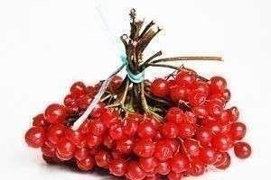 Калина: польза и вред целебной ягоды