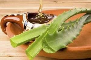 Варенье из алоэ: рецепты с медом и сахаром и его польза при разных болезнях