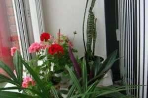 Какие цветы должны быть в доме для гармонии и счастья?