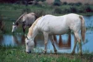 Год 2002 - год водяной Лошади