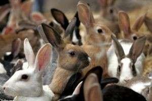 К чему снится кролик: прибыль или неприятности?