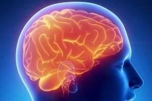 Анатомия и физиология головного мозга