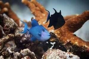 Морские рыбы: названия, особенности, интересные факты