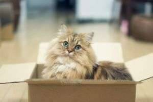 Почему кошки любят пакеты и коробки