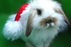 Год 2011 какого животного? Спросите у Белого Кролика!